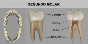 14_SegMuela_Inf