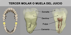 15_TerMuela_Inf
